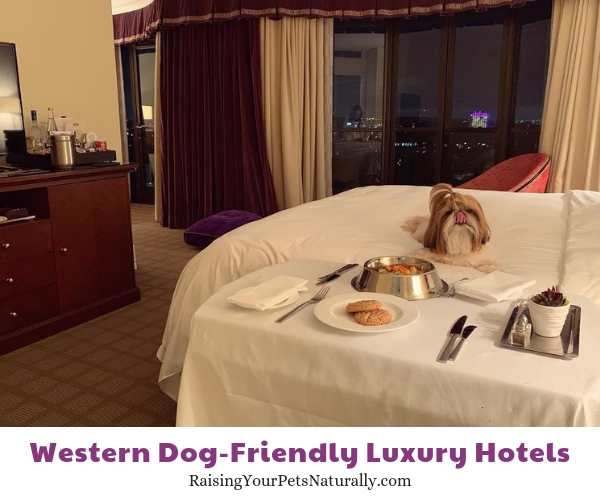 Beverly Hills pet friendly resorts