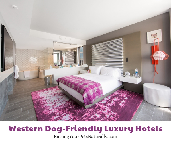 Luxury pet friendly hotels in Washington