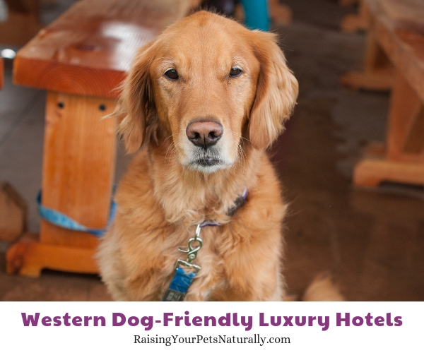 Pet friendly Washington Resorts