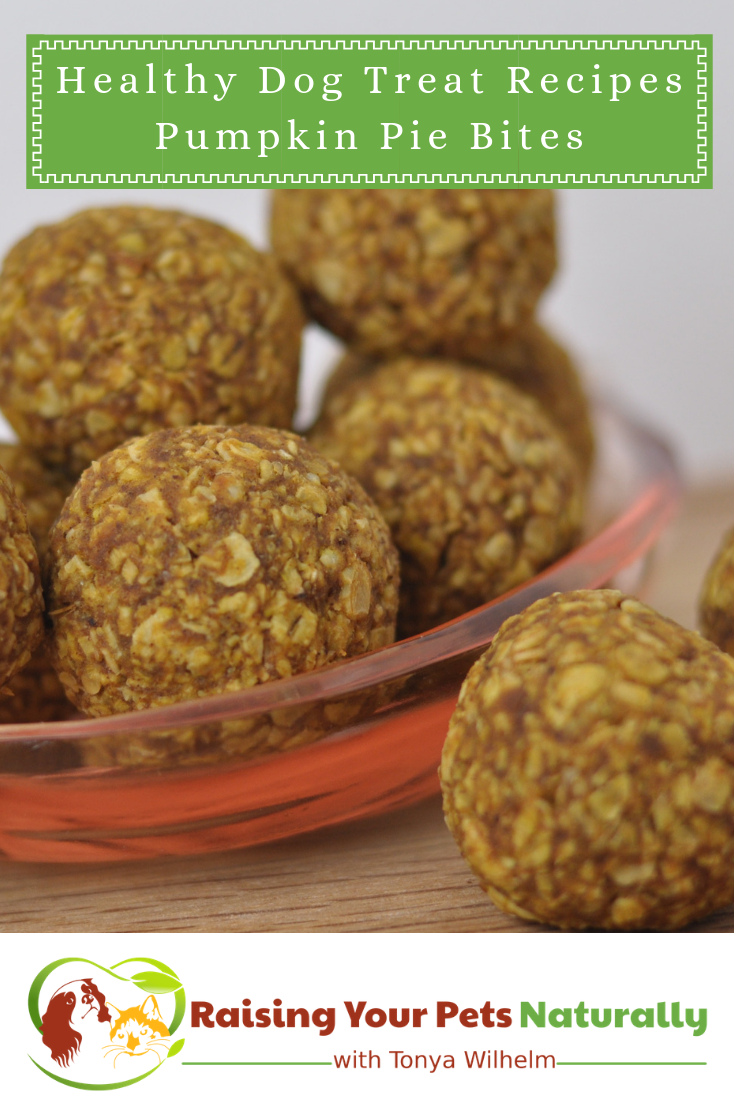 Healthy Homemade Dog Treats with Pumpkin. This easy organic dog treat recipe is made with nutritious pumpkin.  #raisingyourpetsnaturally #healthyhomemadedogtreats #homemadehealthydogtreats #healthyhomemadedogtreatrecipies