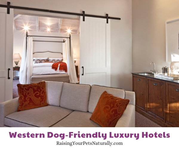 Best pet friendly hotels in California