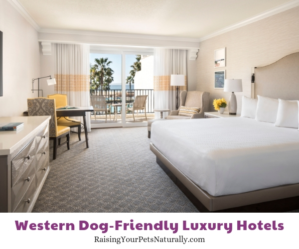 California luxury hotels that allow pets