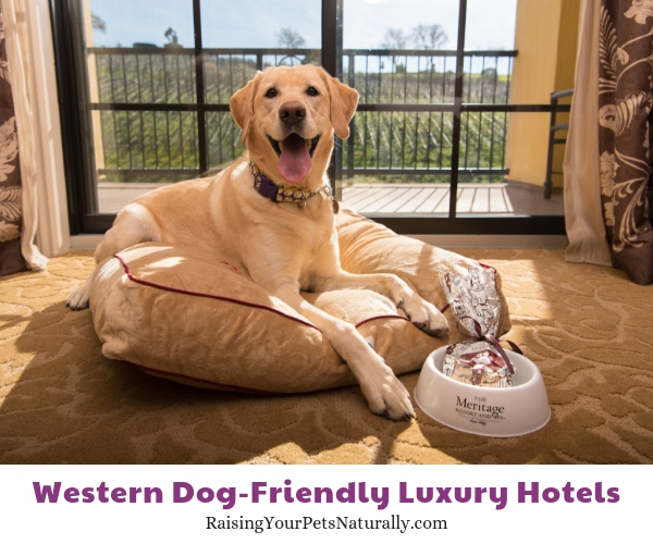 Best pet friendly hotels in napa