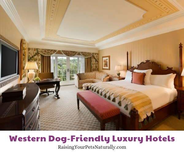 Best pet friendly hotels in CA