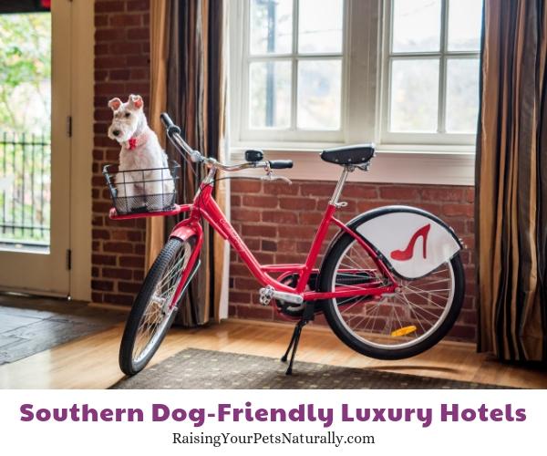 Luxury pet friendly resorts in VA