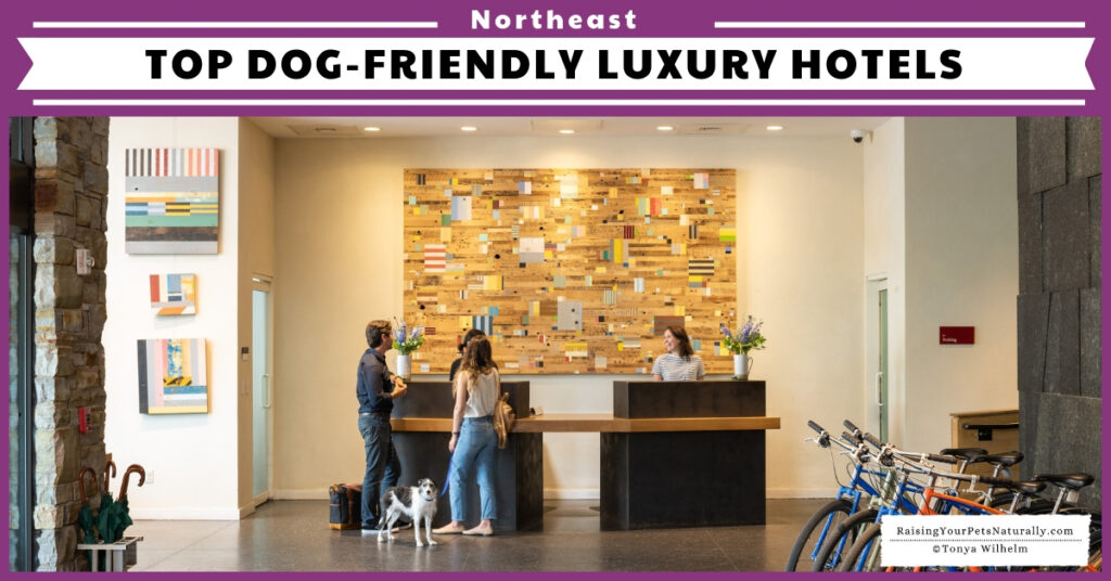 Dog-friendly resorts in New England