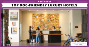 The Best Luxury Pet-Friendly Hotels in the Northeast Region