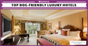 The Top Pet-Friendly Luxury Hotels, Resorts and Accommodations on the West Coast