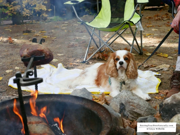 Pet friendly camping