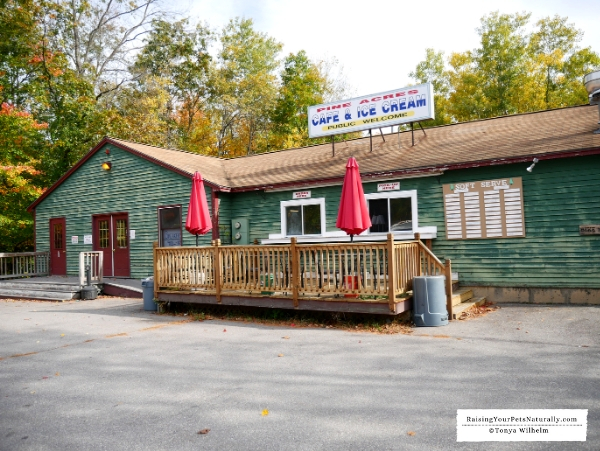 Pet friendly cabin rentals