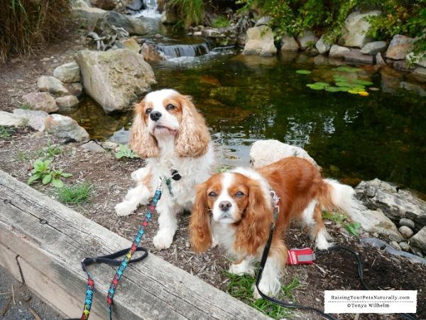 Dog friendly Pennsylvania road trip