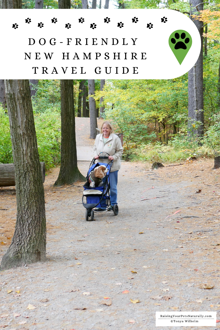 Dog-friendly NH state parks, hikes, cabins and travel guide.  Check out these great New Hampshire pet-friendly things to do.  #DextersDestinations #RaisingYourPetsNaturally #dogfriendlynewhampshire #petfriendlynewhampshire #dogfriendly #petfriendly #NewHampshire