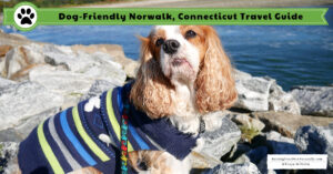 Dog-Friendly Norwalk, Connecticut and Surrounding Area| Dog-Friendly Vacations New England Fall Trip