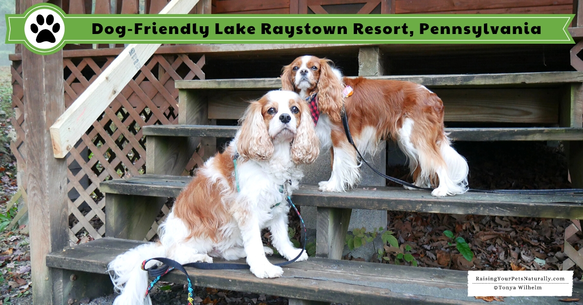 Dog friendly vacation rentals in PA