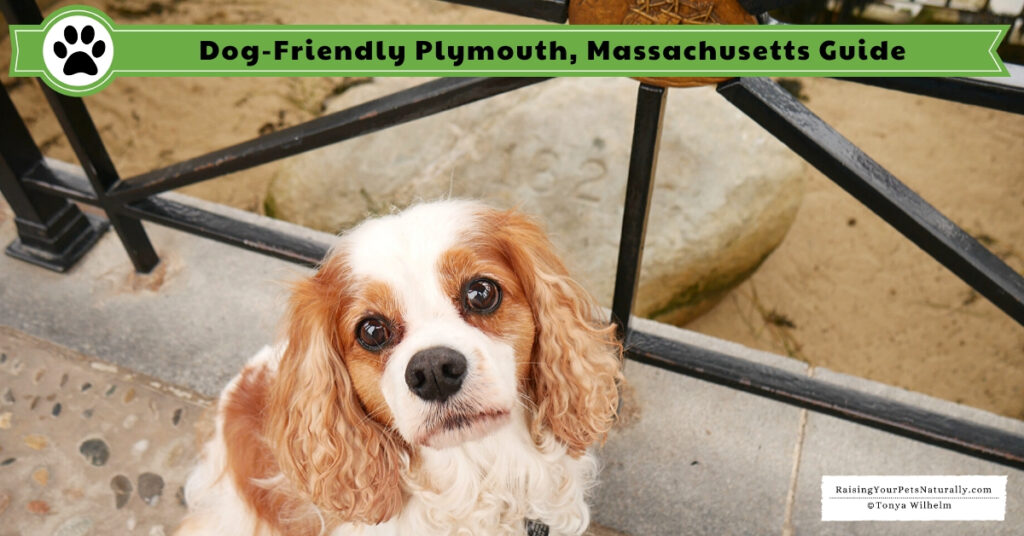 Pet friendly Plymouth