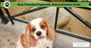 Dog-Friendly Plymouth, Massachusetts | Dog-Friendly Vacations New England Fall Trip