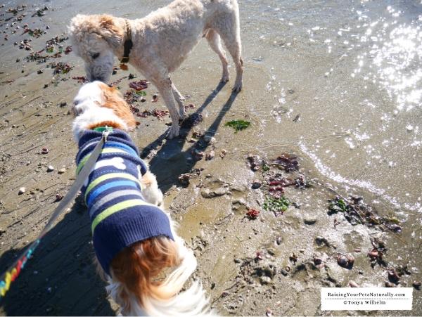 Dog beaches in Norwalk