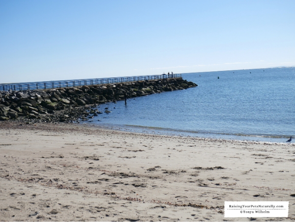 Beaches that allow dogs in Connecticut