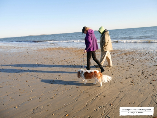 Beaches that dogs can walk
