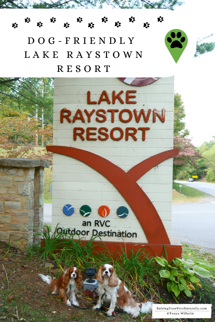 Dog-friendly cottages and resorts in Pennsylvania. Learn why Lake Raystown Resort is a great pet-friendly accommodation while traveling with a dog. #DextersDestinations #RaisingYourPetsNaturally #Raystown #VisitPA #RuffinItAtRaystown #dogfriendly #petfriendly #dogfriendlytravel