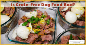 Is Grain Bad for Dogs or is Grain-Free Dog Food Bad?