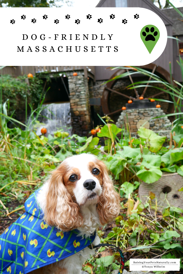 Dog-Friendly Massachusetts Travel Guide. You won\'t want to miss these pet-friendly Massachusetts accommodations & attractions. #DextersDestinations