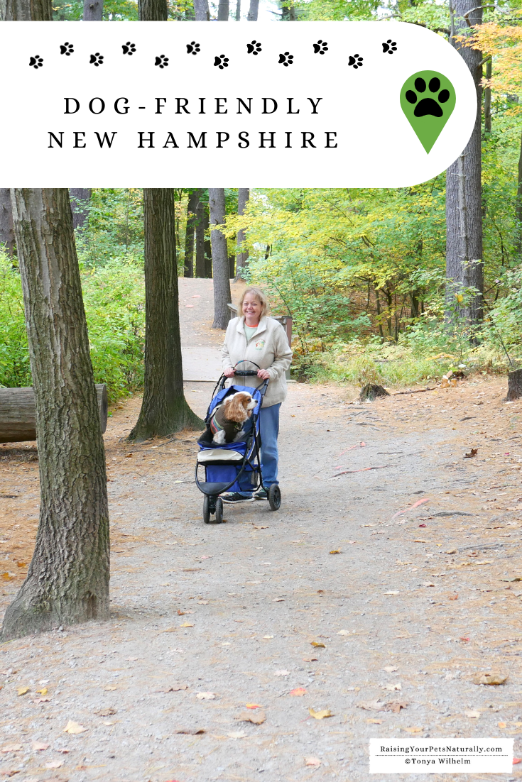 Dog-Friendly New Hampshire Travel Guide.  Check out these New Hampshire pet-friendly accommodations and attractions.  #DextersDestinations #DogFriendly #NewHampshire #DogFriendlyNewHampshire