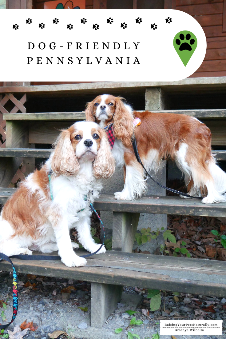 Dog-friendly Pennsylvania Travel Guide. If you\'re traveling with your dog in Pennsylvania, you won\'t want to miss these great dog-friendly spots. #DextersDestinations
