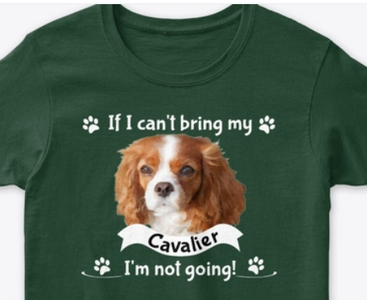 If I can't bring my cavalier