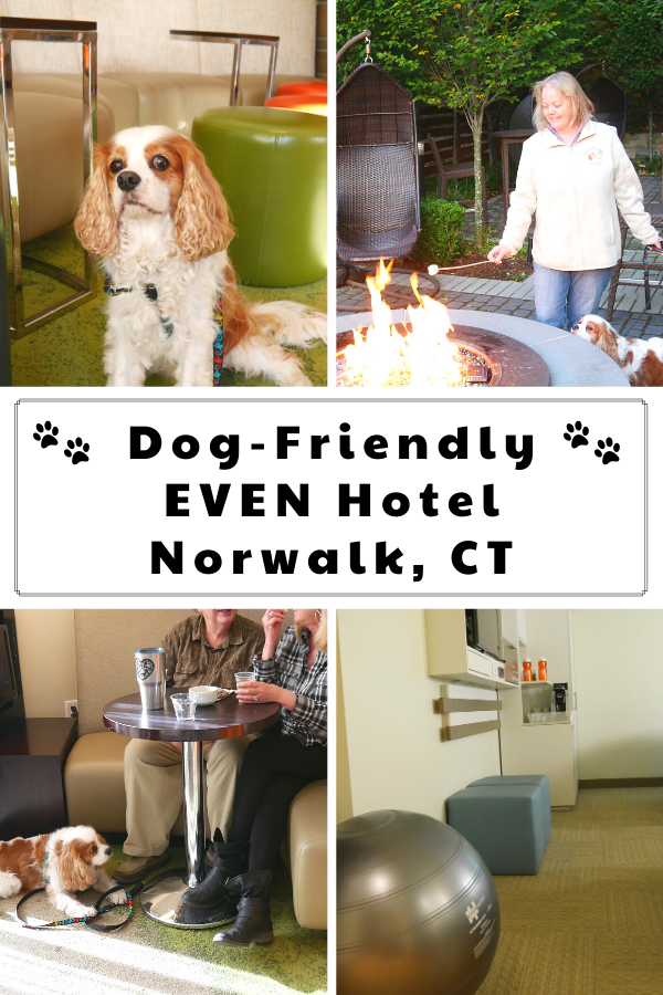 Pet-Friendly Hotel in Norwalk, Connecticut. Dog-Friendly EVEN Hotel in Norwalk, CT Review. #DextersDestinations #RaisingYourPetsNaturally #EVENhotelsNorwalk #evenhotels #dogfriendly #petfriendly #Norwalk #NorwalkCT #dogfriendlyct #Connecticut #CTvisit #newengland #travelingwithadog #dogroadtrip #dogfriendlytourism #travelwithdog #travelwithpets #dogfriendlyactivities