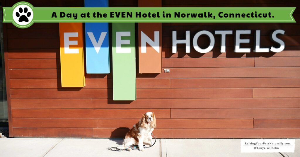 Pet-friendly hotel chains