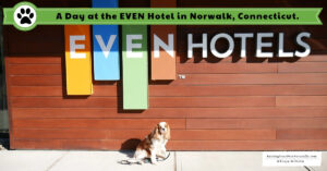 Pet-Friendly Hotel in Norwalk, Connecticut | Dog-Friendly EVEN Hotel in Norwalk, CT Review