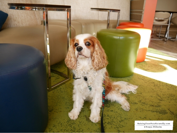 CT pet-friendly hotels