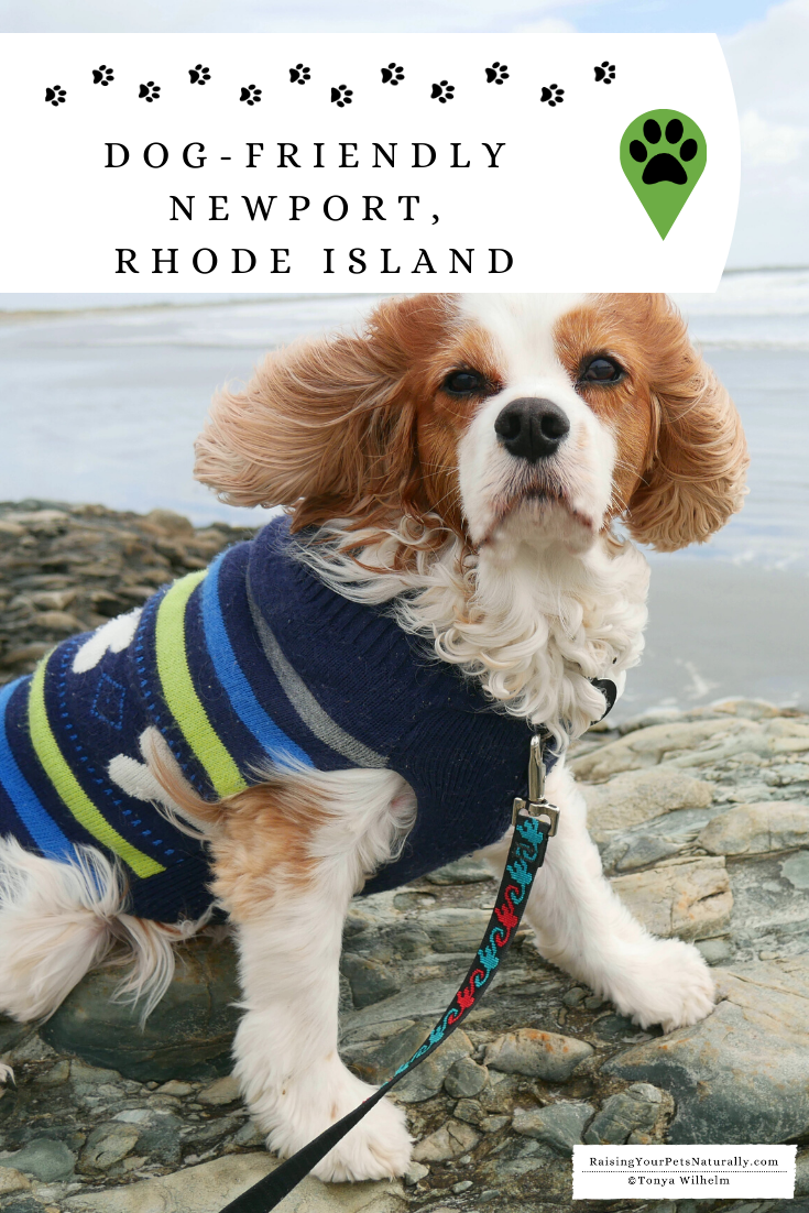 Dog-Friendly Newport, Rhode Island fall road trip. Check out all the fun dog-friendly things we did during our New England road trip.  #DextersDestinations #RaisingYourPetsNaturally