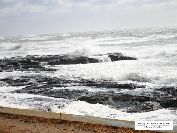 Atlantic Ocean drives
