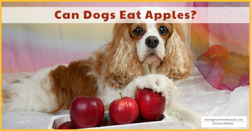 Fruits that dogs can eat