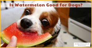 Is Watermelon Good for Dogs? Watermelon Calories, Benefits, Nutrition, and Recipes