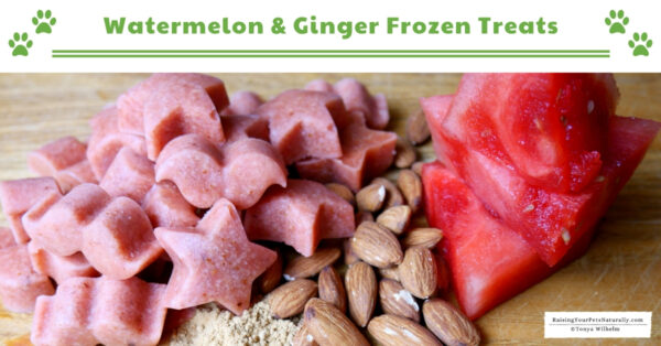 Watermelon dog treat recipes