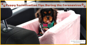 Puppy Socialization Tips During the COVID-19 (Novel Coronavirus)