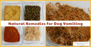 Natural Remedies for Dog Vomiting | Dog Puking Treatment