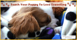 6 Ways to train your puppy to be a great travel companion.