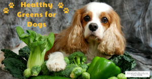 Healthy Greens for Dogs to Add to Raw or Home Prepared Diets | Dexter's Super Greens Mix