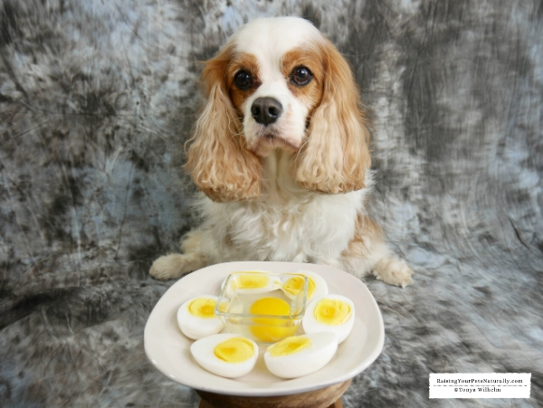Can dogs have eggs