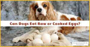 Protected: (5/27/20) Can Dogs Eat Raw or Cooked Eggs? | Are Eggshells Good for Dogs? (Early access for our Patreon community)