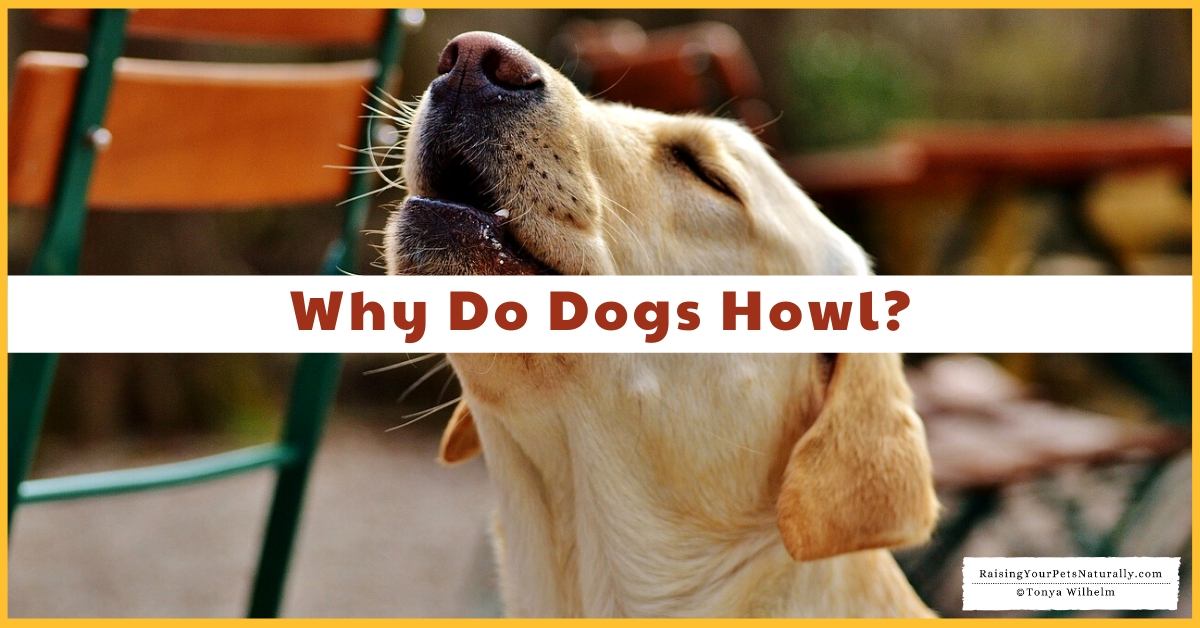 Why do puppies howl at things
