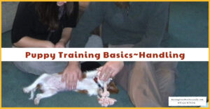 Puppy Training Basics and Videos | Teaching Your Puppy to Enjoy Handling, Grooming & Nail Trims (Early access for Patreon members)