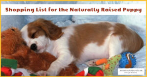 New Puppy Must-Haves: a Shopping Checklist for Your New Puppy (Early access for our Patreon community)